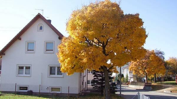 Themenbild: Straße mit Bäumen