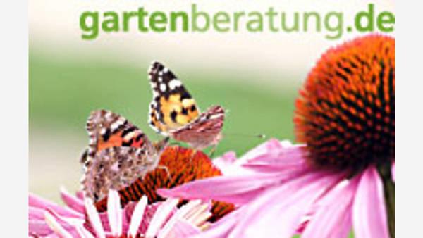 Themenbild: Schmetterling auf Blume