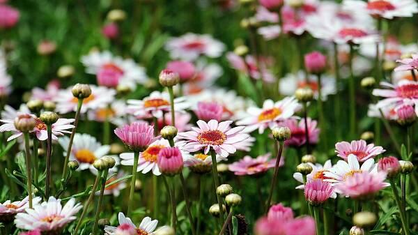 Themenbild: Blumenwiese