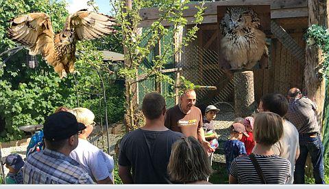 Besuch der Greifvogelauffangstation