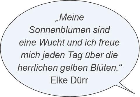 © VWE