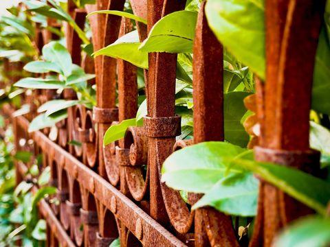 Streit Am Gartenzaun Einfriedungen Verband Wohneigentum E V