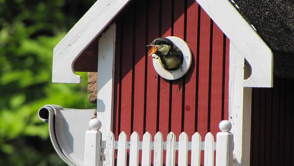 Themenbild: Vogelhaus mit Meise
