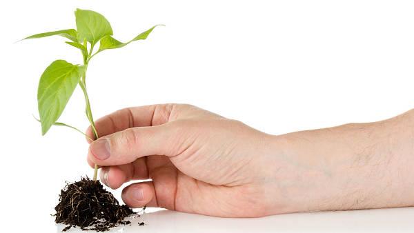 Themenbild: Hand hält eine kleine Pflanze