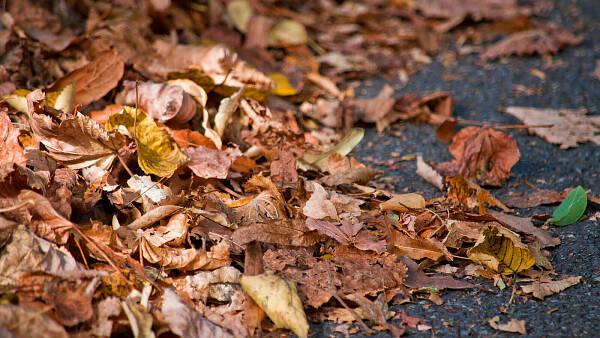 Themenbild: Herbstlaub auf der Straße