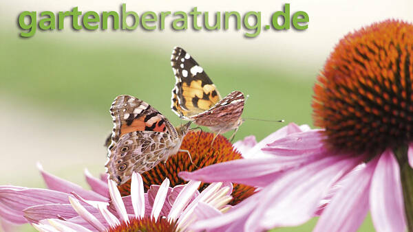 Themenbild: Default Bild Gartenberatung