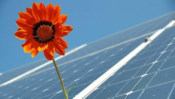 Themenbild: Solarpanels mit einer Blume dazwischen