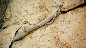 Wurzel auf Fels