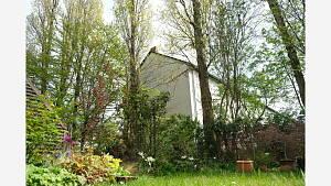 Pappeln am Gartenrand