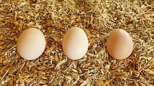 die ersten Eier