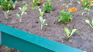 Schneckenzaun um Gemüsebeet