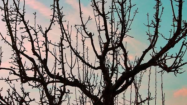 Themenbild: Obstbaum im Januar