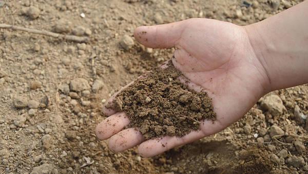 Themenbild: Erde in der Handfläche.