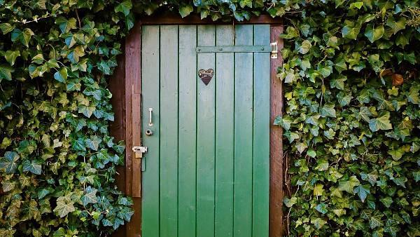 Themenbild: Efeu um eine Tür herum.