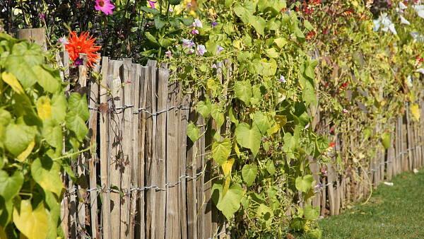 Themenbild: Gartenzaun