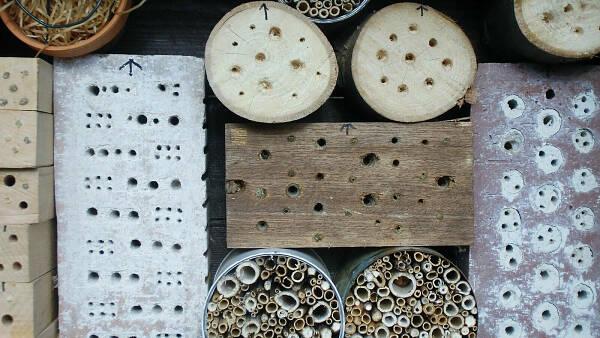 Themenbild: Insektenhotel