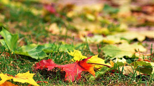 Themenbild: Herbstlaub