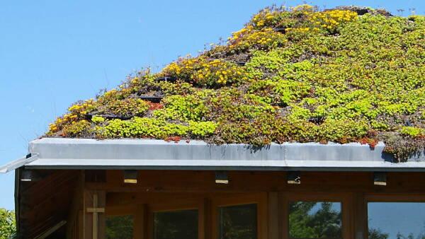 Themenbild: Dachbegrünung