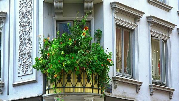 Themenbild: Balkon mit Pflanzen