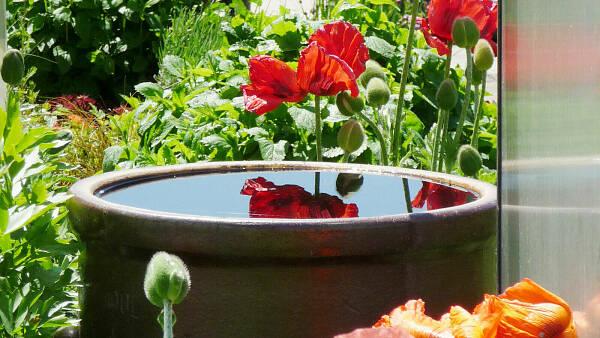Themenbild: Regentonne im Garten