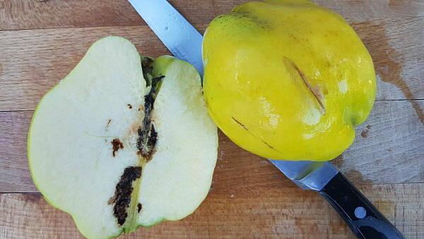 Themenbild: Apflewicklerschaden