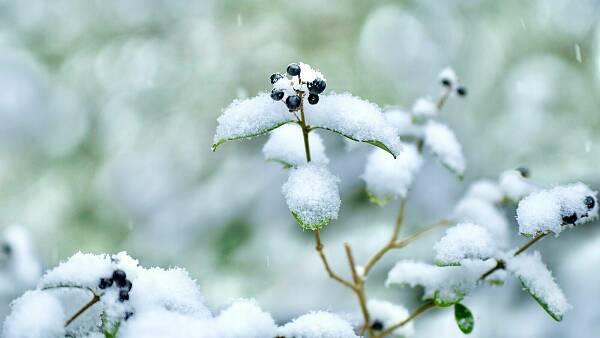 Themenbild: Schnee im Garten