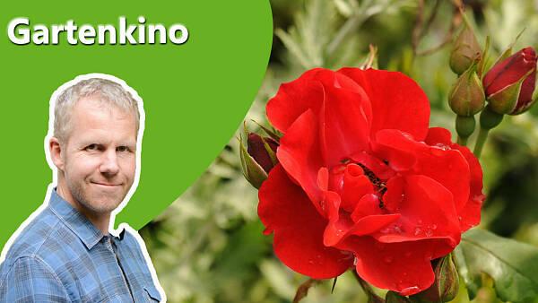 Themenbild: Gartenkino aktuell mit Philippe Dahlmann