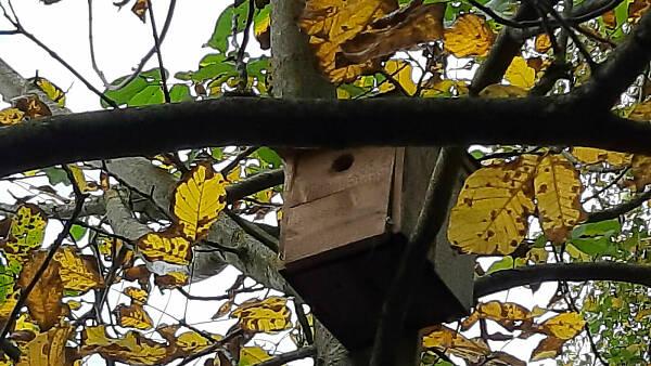 Themenbild: Baum mit Nisthilfe