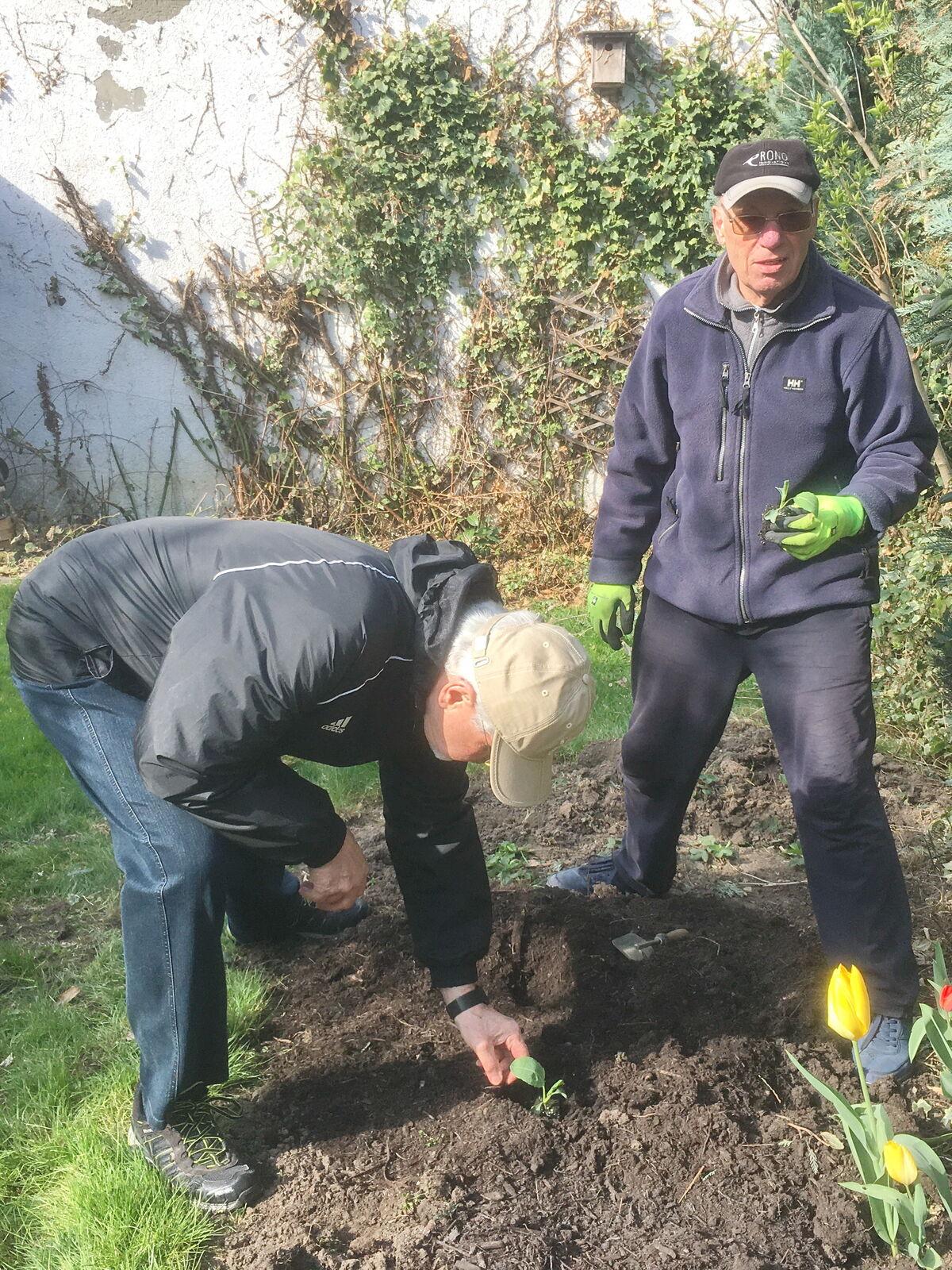 Pflanzung der ersten Blumenköhler