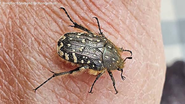 Themenbild: Käfer