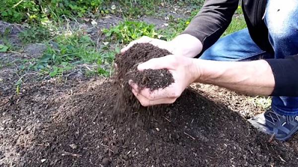 Themenbild: Kompost