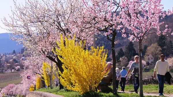 Themenbild: Frühling