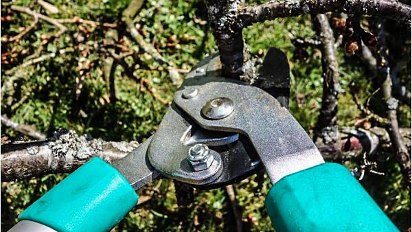 Themenbild: Baumschnitt