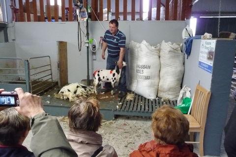 """Die """"Kissane Sheep Farm"""""""