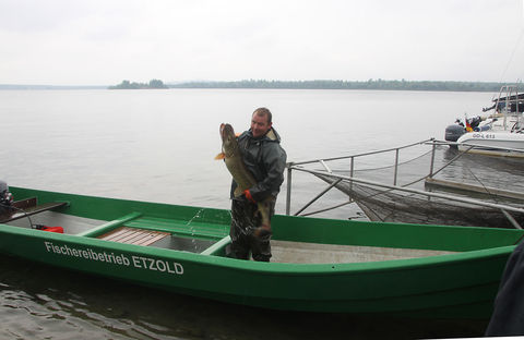 Ein kapitaler Hecht ist dem Fischer Thomas Etzold ins Netz gegangen.