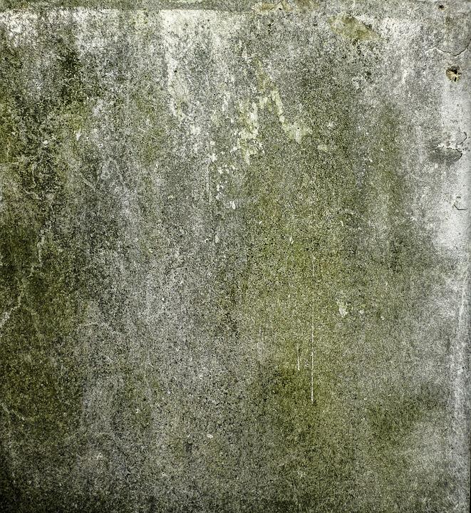 grüner Pilzbelag an einer grauen Außenwand