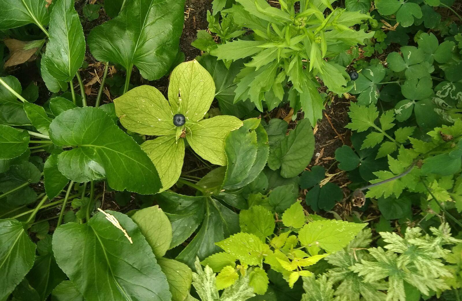 Bodendeckervielfalt mit verschiedenen Blattstrukturen und -farben