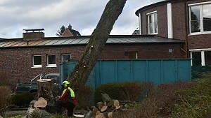 abgesägter Baum mit Holzfäller davor kniend