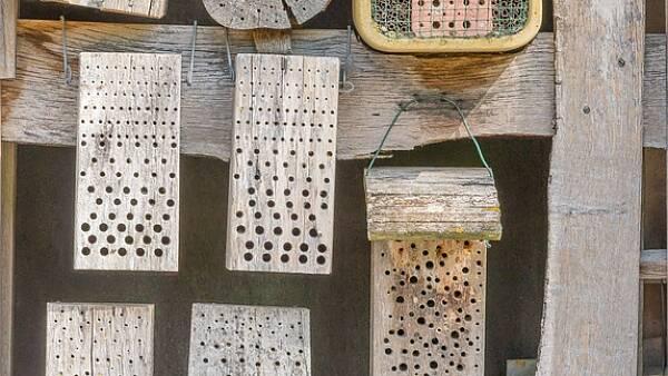 Themenbild: verschiedene Nistmöglichkeiten für Wildbienen