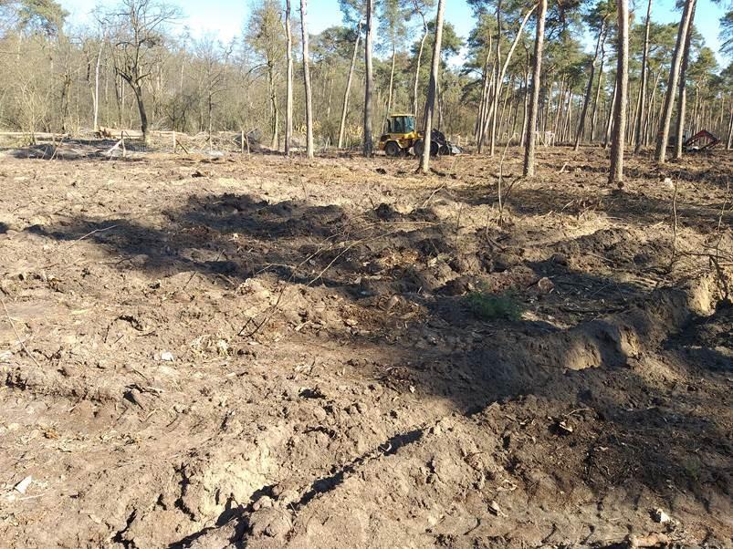 Waldzerstörung_Nähe_Blumenau