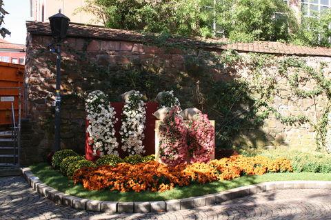 Chrysantheme Lahr 2013