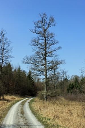 Durch den Einkornwald bei Hessental.