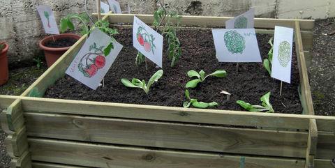 Tomaten, Paprika, Gurken & Co - Aussaat-Hinweise