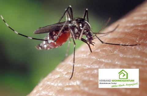 Mücken: Tipps gegen lästige Plagegeister