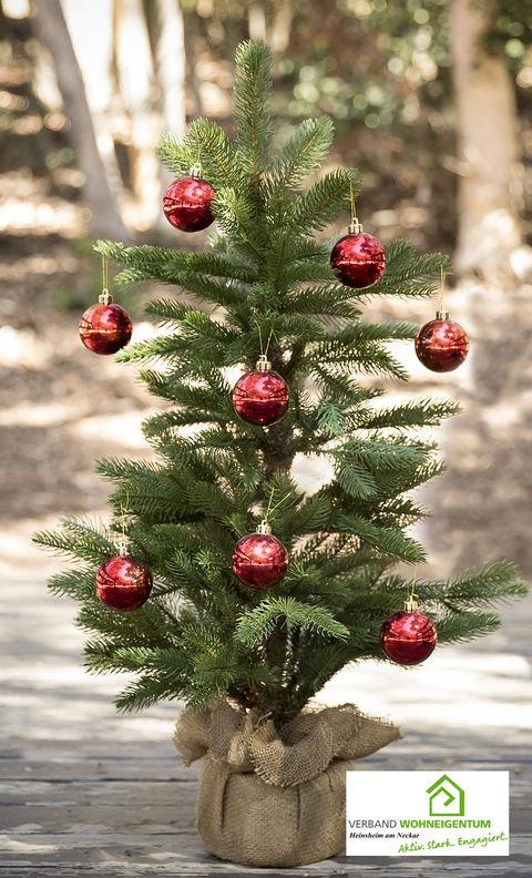 Weihnachtsbaum mit Wurzelballen.