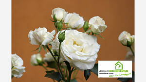 Rosenpflege zum Herbst und Winter
