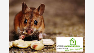 Ratten und Mäuse können angelockt werden!