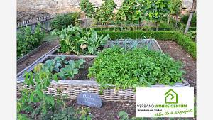 Eigenes Gemüse - gesund und klimafreundlich