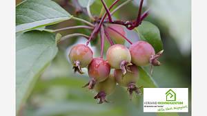 Fruchtfall zum Ausdünnen nutzen
