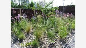 Schotterwüsten werden zu Blütenoasen